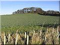 NU1830 : Turnip field at Cross Hill by Walter Baxter