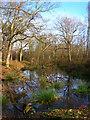 TQ5115 : Moat, Moat Wood by Simon Carey