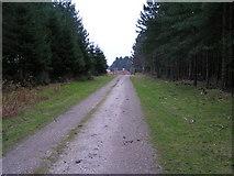 SJ9715 : Road to Warren Hill and Badger Slade Wood by Jack Barber