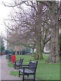 TQ8485 : Leigh Library Gardens by Julieanne Savage