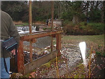 SY8888 : Sluice Gate on River Piddle by ANDY FISH