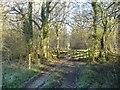 SU0585 : Flaxlands Wood by Roger Cornfoot