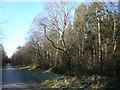 SK3063 : Farley Moor - Woodland Path by Alan Heardman