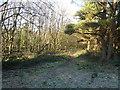 SK2962 : Farley Moor - Woodland Path by Alan Heardman
