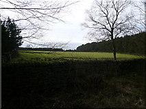 SK2962 : Farley Moor - Field and Woodland by Alan Heardman