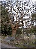 TQ0682 : Oak tree & Squirrel by Rob Emms