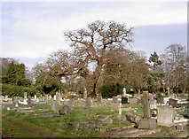 TQ0682 : Oak Tree looking over Grave Stones. by Rob Emms