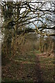 SO9046 : Bridleway to Croome Perry Wood by Philip Halling