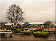 SJ7243 : Winter colour at Bridgemere Garden World by Espresso Addict
