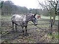 SK3462 : Horses in field adjoining Overton Hall by Alan Heardman