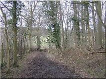 SU6778 : Bridleway north of Cross Lanes by Graham Horn