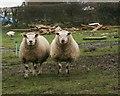 NZ7615 : The Ugly Sisters by Mick Garratt