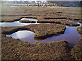 NT6380 : Salt Marsh, Tyninghame by Dr Duncan Pepper