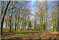 SU5742 : Unnamed Beech Wood on Becket's Down by Peter Facey
