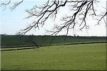 SS7811 : Thelbridge: Five Oaks Moor by Martin Bodman