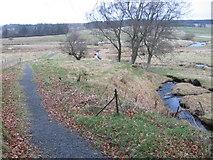 NS6725 : River Ayr Way by Upper Wellwood by Chris Wimbush