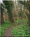 SJ6755 : Woodland near Marshfield Bridge by Espresso Addict