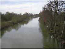 TQ0866 : River Thames: Desborough Channel by Nigel Cox