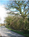 SJ5638 : Wood beside Ash Lane by Espresso Addict