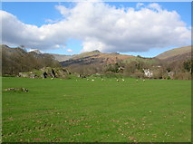 NY3704 : Field near Ambleside by DS Pugh