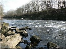 SE2436 : View of the River Aire downstream of the weir by Rich Tea