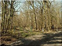 TM0543 : Wolves Wood Nature Reserve by Robert Edwards