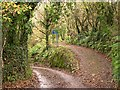 SX2052 : Junction in a wooded valley by Tony Atkin