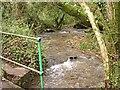 SX2052 : Valley Bottom Stream by Tony Atkin