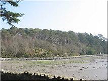 SH5571 : Coed Cyrnol and the Belgian Promenade from Church Island by Eric Jones