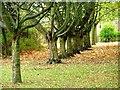 NZ2523 : Urban Woodland, School Aycliffe by Mick Garratt