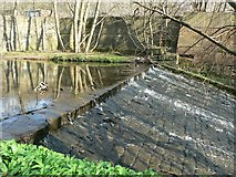 SE2436 : Cow Beck Damstones and Kirkstall Forge Goit by Rich Tea