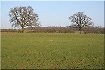 TF0323 : Farmland off the A151 by Kate Jewell