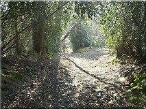 TQ1928 : Bridleway  to Sedgwick lane by Peter Cox