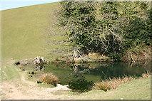 SS8928 : Dulverton: pond by Martin Bodman