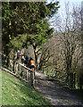 SJ2131 : Horses on Llwybr Ceiriog bridleway by Espresso Addict