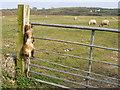 SH4267 : Looking across grazing field to Tyddyn-y-fawd north of Newborough / Niwbwrch by Brian Charlton