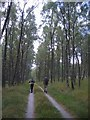 NN6160 : Woods nr Craignour Lodge by Dan Massey