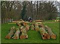 SO6983 : logging by Neil Owen