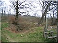 SJ2533 : Woodland by the Offas Dyke LDP by John S Turner