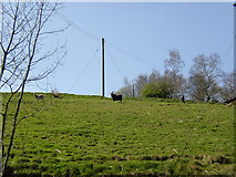 SE1323 : Goats, Southowram by Humphrey Bolton