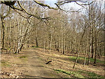 SE1223 : The path through Cromwell Wood, Southowram (2) by Humphrey Bolton