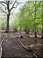 TL4407 : Parndon Wood by Lynda Poulter