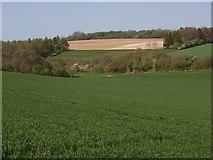 SU4356 : Farmland, Crux Easton by Andrew Smith