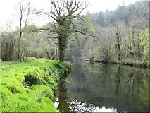 SX4766 : River Tavy, Buckland Abbey Estate by Brian