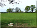 SO7689 : Grazing, Wooton, Shropshire by Roger  Kidd