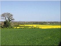 TR3156 : View across farmland, Woodnesborough by Nick Smith