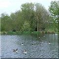 SO7892 : Pool near Claverley, Shropshire by Roger  Kidd