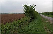TA0116 : New Hedge Planting by David Wright