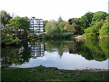 TQ2686 : Vale of Health pond by ceridwen