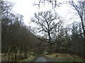 NM8364 : Ariundle oakwoods by Peter Van den Bossche